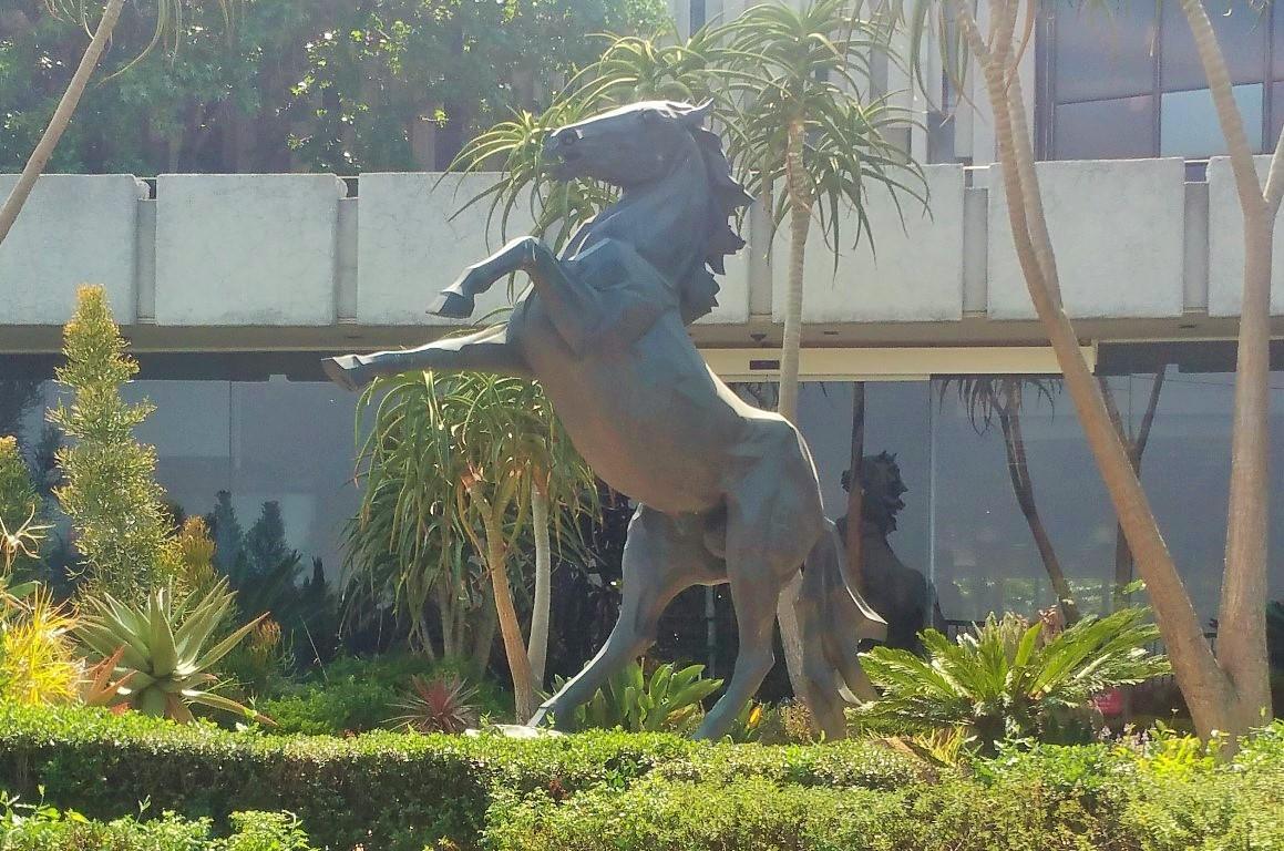 Remembering Sandton's Famous Stallion | The Heritage Portal